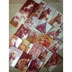Sada pohlednic - koně - 20ks